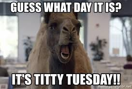 Titty Tuesday Memes - guess what day it is it s titty tuesday geico camel hump day