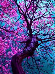best 25 japanese cherry tree ideas on cherry blossom