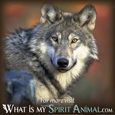 dreams about wolves wolf meaning dictionary