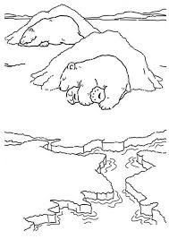 polar bear coloring pages roaring coloringstar