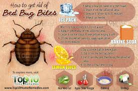 Can Bed Bugs Live In Water How To Get Rid Of Bed Bug Bites Top 10 Home Remedies
