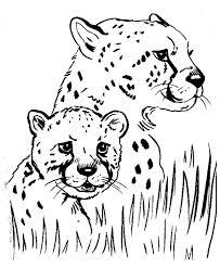 cheetah color page cheetah running coloring page free cheetah
