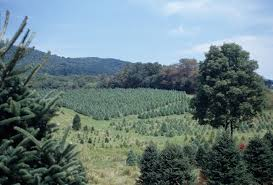 file southern virginia christmas tree farm jpg wikimedia commons