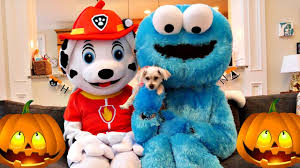 halloween dogs paw patrol and cookie monster trick or treat