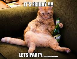Drunk Cat Meme - tgif it s friday cat funny animal photo eight days a week