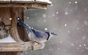 why it u0027s so important to feed your backyard birds this winter
