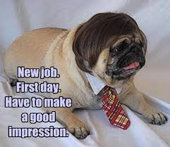 New Job Meme - new job first day have to make a good impression memes