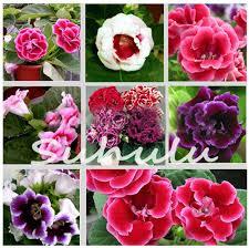 Cheap Flower Seeds - online get cheap flower seeds gloxinia aliexpress com alibaba group