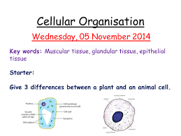 gcse diffusion osmosis and active transport worksheets by