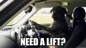 Dog Driving Meme - top caption need a lift dog driving a car quickmeme