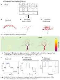 frontiers an inverse approach for elucidating dendritic function