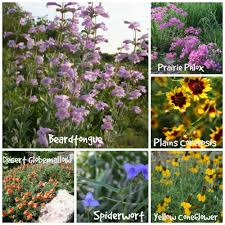 native nebraska plants nebraska wildflower week plants and pests with nicole