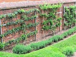 Fruit Garden Ideas Landscaping With Fruit Trees Ideas Garden With And Fruit