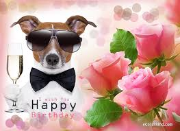 free e card free e cards birthday fugs info