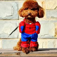 Small Puppy Halloween Costumes Cheap Puppy Halloween Costumes Aliexpress