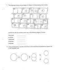 phases of the cell cycle worksheet answers free worksheets library