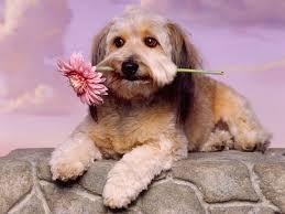 imagenes de animales whatsapp 50 fondos de pantalla con mascotas para whatsapp del 29 de abril