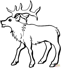 young elk coloring page free printable coloring pages