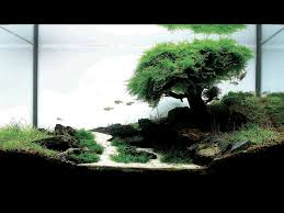 200 best fish tank images on bonsai trees candies and