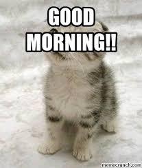 Good Morning Cat Meme - morning