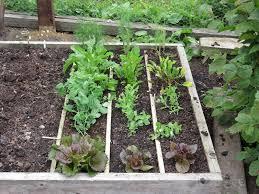 manure trials no dig organic gardening