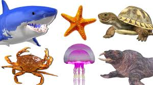 learn sea animals names watch sea animals with 3d animation