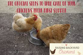 How To Raise Backyard Chickens For Eggs Raising Backyard Chickens Crucial Steps To Take Care Of Your