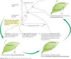 The Light Reactions Of Photosynthesis Use And Produce Hodder Revision Guide Biology 13 Photosynthesis