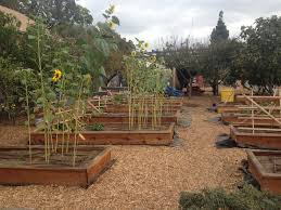 new urban agriculture regulations sprouting in los angeles