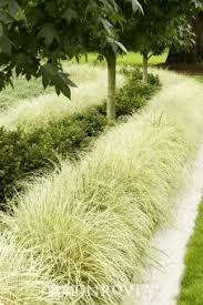 103 best ornamental grasses images on ornamental