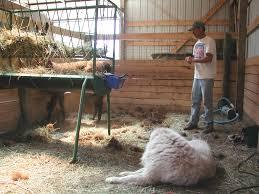 dog barn boarding