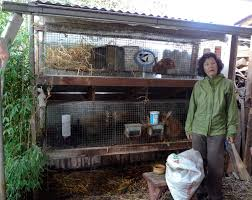 Rabbit Hutch Plans For Meat Rabbits Urban Permaculture In Portland Gather And Grow