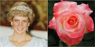 diana rose flowers named after royals princess diana roses