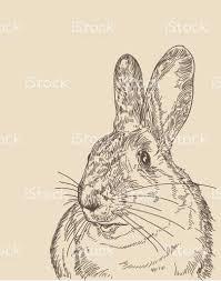 vintage rabbit vintage rabbit stock vector more images of animal 641068306
