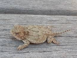 Seeking Lizard Critters By Seeking