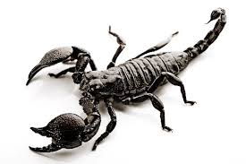 scorpion meaning and interpretations stop
