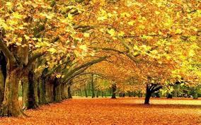 autumn season backgrounds 4216 hdwarena