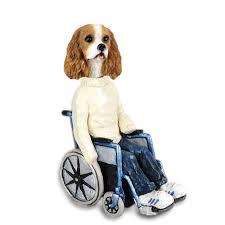 cavalier king charles spaniel brown white wheelchair doogie