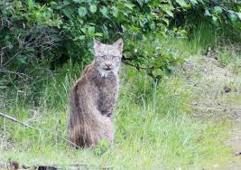 Alaska wildlife tours images Classic alaskan tour alaska outdoors jpg