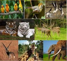 wildlife tours images Exploring gujarat 39 s wild side with gujarat wildlife tours JPG