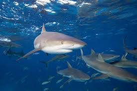 10 interesting facts about sharks