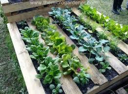 Pallet Ideas For Garden Upcycling Pallet Garden Ideas The Central Eastern