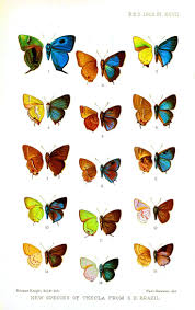 1275 best butterfly images u0026 clipart images on pinterest