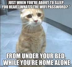 Sad Kitty Meme - sad kitty memes imgflip
