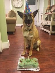 Happy Birthday Dog Meme - happy birthday dog