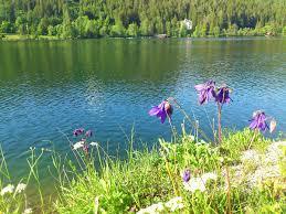 gasthof z sessellift mitterbach am erlaufsee bergfex badesee erlaufsee naturbadesee see baden schwimmen