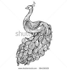 peacock drawing stock images royalty free images u0026 vectors