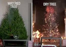 christmas tree christmas tree fires are far worse if you don t water your tree