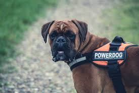 everything you need to know about service dogs best4pets