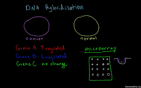 Flag Tag Dna Sequence Dna Sequencing Video Biomolecules Khan Academy
